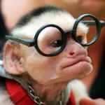 monkey-with-glasses